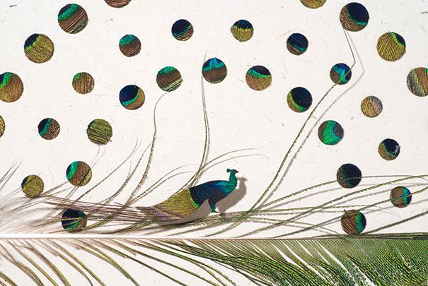 feather-art-christ-maynard-10